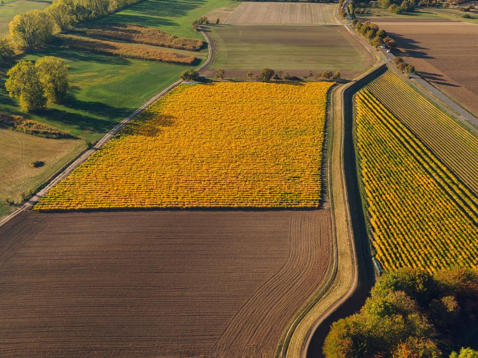Luftbild Spargelfelder im Herbst bei Trebur