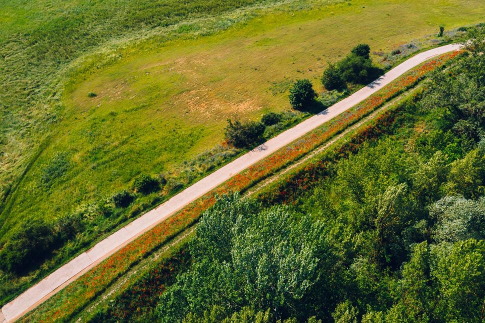 Luftbild Klatschmohn bei Trebur