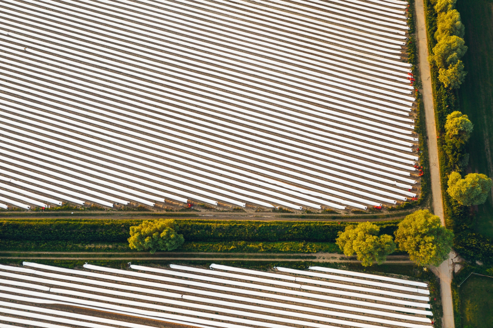 Luftbild Spargelfelder im Sommer bei Gross-Gerau