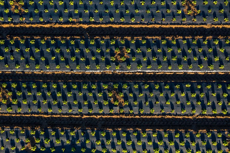 Luftbild Gemüseanbau bei Trebur
