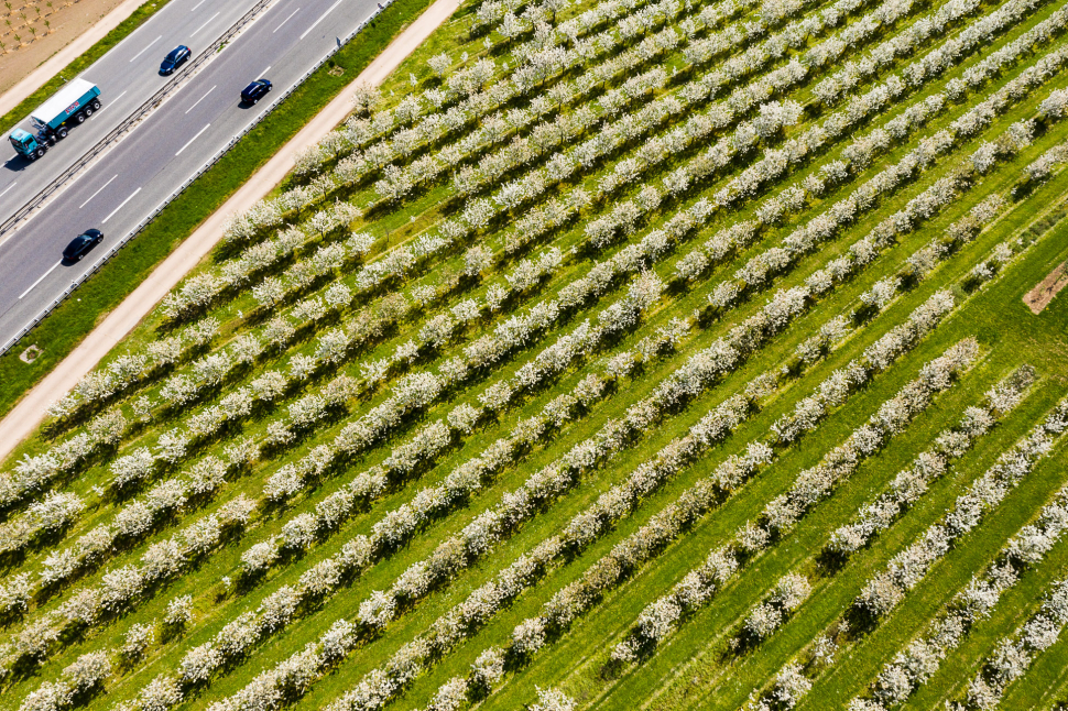 Luftbild Kirschblüte bei Mainz-Finthen
